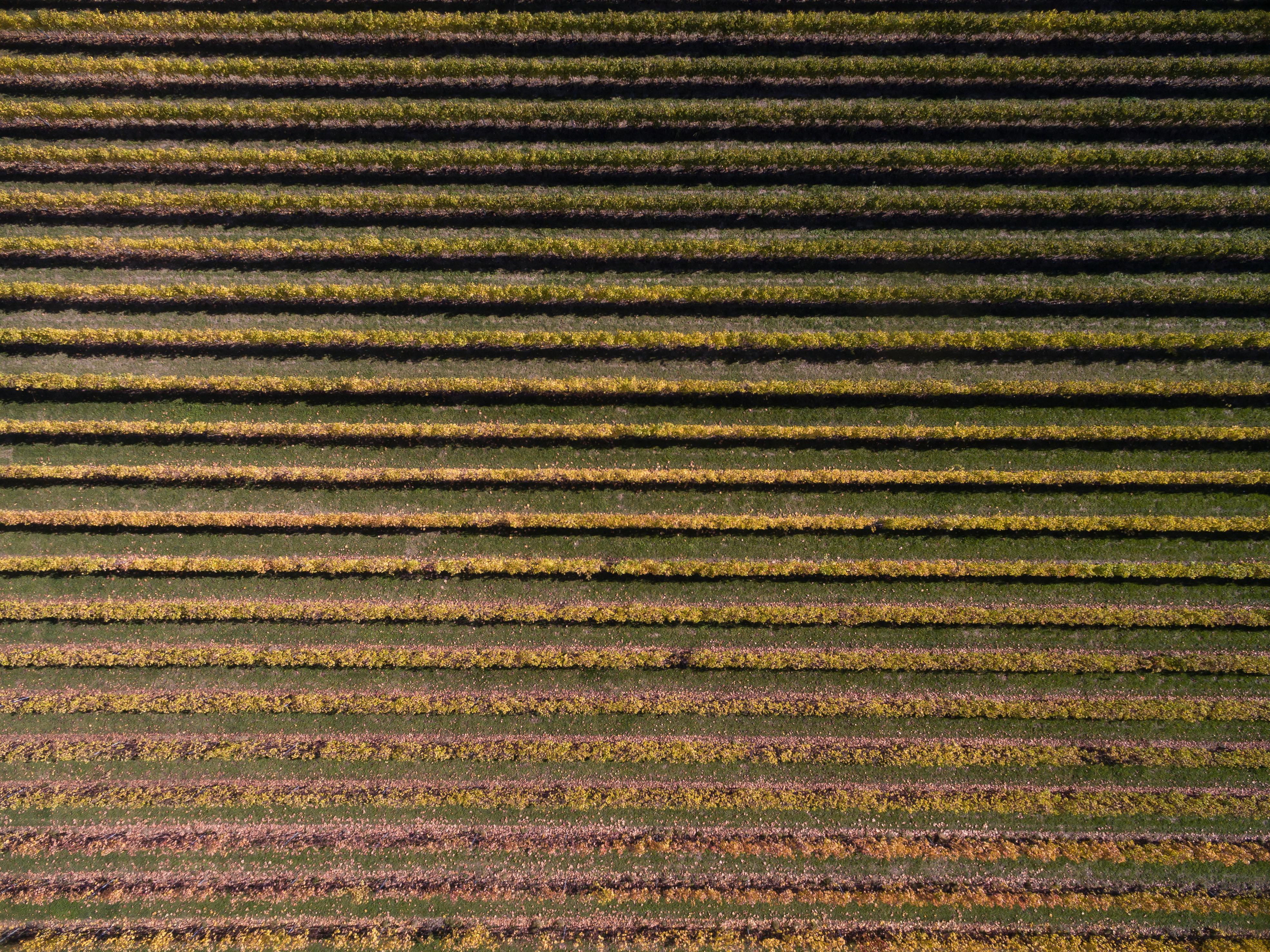 Vineyards-Valpolicella-Valpantena-Art